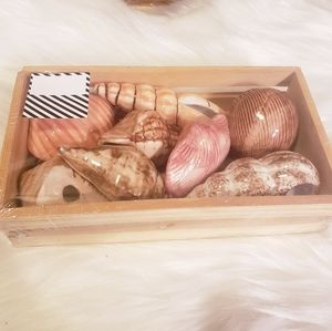 New Ceramic Painted Seashells in a crate